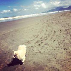 """35 curtidas, 1 comentários - Natasha Reis 🐶🐾🌹 (@natashadog_) no Instagram: """"#praiasdobrasil #praia #peruibe #ondas #dog #alegria #love #life  #sol #nadar #litoral #doggy…"""""""