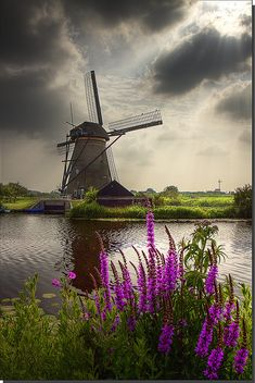 Windmill on a river. Kinderdijk, Alblasserwaard, Zuid-Holland, The Netherlands