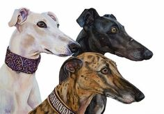 Greyhounds Yuna Enzo & Nero Art print  size 8x12 by TanjaOnTheWall, €20.00