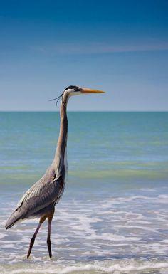"""janetmillslove: """"Heron moment love """""""