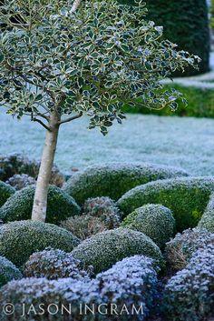 Abbey House Garden in Winter Garden Landscape Design, Garden Landscaping, Dream Garden, Home And Garden, Rose Bush Care, Blossom Trees, White Gardens, Yard Design, Autumn Garden