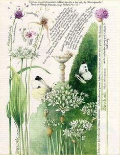 21 foto 55 marjolein bastin ekapetina for Plantas decorativas amazon