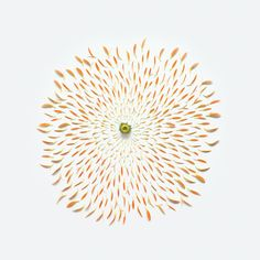 fong qi wei flower exploded