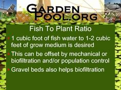 getting-started-in-aquaponics-010