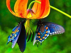 Butterfly Desktop | Beautiful Butterfly Desktop Wallpapers