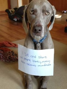 DOG SHAMING-- LOL!