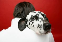 """""""Slideshow: The Best Dog Breed for Your Health and Personality""""  (slideshow)  [Pets.WebMD.com]"""