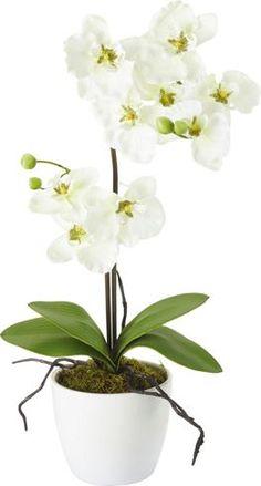 Dekorative Orchidee im Keramiktopf - bringt die Natur in Ihr Zuhause