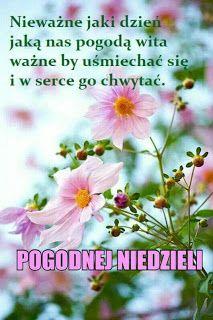 Dla każdego: MIŁEJ NIEDZIELI Good Morning, Plants, Facebook, Blog, Frases, Text Posts, Good Morning Funny, Faith, Pictures
