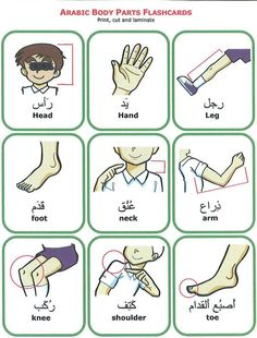 Body Parts in Arabic to English. Learn Arabic visit: http://www.islamic-web.com/arabic-course/learn-arabic-language-online-free-in-english/