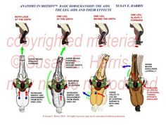gaited dressage - Google Search