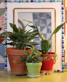 How To Care For House Plants In Winter