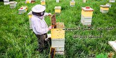 خلية نحل العسل لانجستروث أهميتها وميزاتها و مبادئها من موقع نحلة احلى عالم