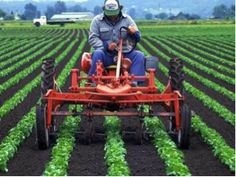 Young Living farms maintain high standards for quality control of all their products. Small Vegetable Gardens, Vegetable Garden Design, Garden Tools, Young Living Farms, Farm Layout, Market Garden, Old Farm Equipment, New Farm, Hobby Farms