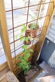 Dagdrömmar & Verklighet: Uppstånden ifrån det döda.. Garden Inspiration, Garden Ideas, Indoor Garden, Trellis, Pergola, Sweet Home, Landscape, Tiny House, Flowers