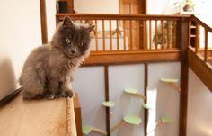 Eliza et Tiffany ont aménagé un vrai petit coin de paradis pour leurs chats. © Rebecca Mountain