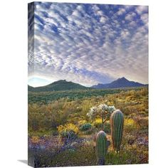 Global Gallery Nature Photographs Saguaro and Teddybear Cholla Amid Flowering Lupine And California Brittlebush by Tim Fitzharris Photographic Prin...