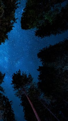 Trees   Cool Backgrounds   Iphone wallpaper night sky, Night sky wallpaper, Sky aesthetic
