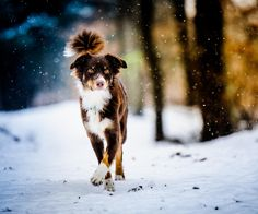 15 Most Beautiful Photography of Dogs | FunGur.com