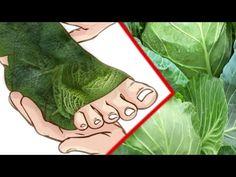 Plante de Sănătate - YouTube