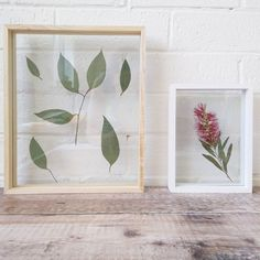 Create your own wall art with native plants Double Sided Sticky Tape, Framed Leaves, Glass Picture Frames, Back Pieces, Printed Linen, Floating Frame, Native Plants, Indoor Plants, Nativity