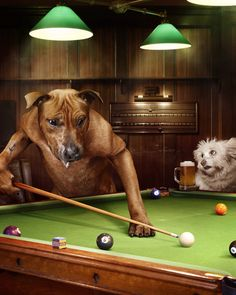 Dogs In Real Life Playing Pool
