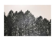 """""""Pines"""" by Katie Abbott in beautiful frame options and a variety of sizes."""