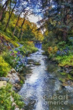 Forest Stream by Ian Mitchell