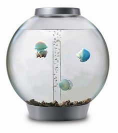 just wiki-ed how to start a jellyfish aquarium. I WANT THESE JELLYFISH. omg.  We have one of these aquariums at The Planet!