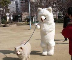 Dog walking dog.