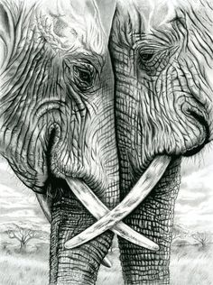 Elephants Giclee . Charcoal & Pencil. Printed on MOAB Entrada Natural Rag 300 by roxy5235 on Etsy