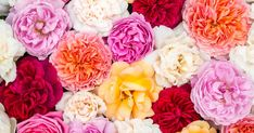 Parfüms im Hochsommer sollen frisch, blumig und nach Urlaub duften: Das sind unsere Top 7 Duftfavoriten von Guerlain, über Penhaligon's bis Kenzo.