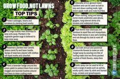 Great polycultural urban farming tips!