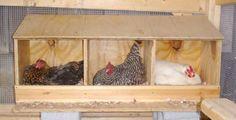 chicken hutch - Google Search