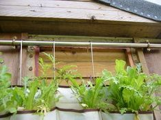 Picture of Attach Pole to Shed or Wall Vertical Vegetable Gardens, Indoor Vegetable Gardening, Container Gardening, Veggie Gardens, Growing Vegetables, Growing Plants, Tomato Fertilizer, Potager Garden, Gravel Garden