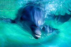 Dolphin at Sea Life Park, Oahu, Hawaii