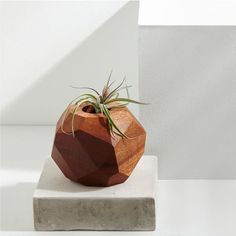 "Foxwood Co. Plantholder + Air Plant - Mahogany | west elm - 4""h -$52 (less 20% is $41.60) - placed with vase on coffee table"