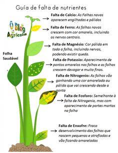 O Blog Agrícola: Guia para detectar os nutrientes em falta nas plantas ou arvores http://oblogagricola.blogspot.pt/2015/01/guia-para-detectar-os-nutrientes-em.html?spref=fb