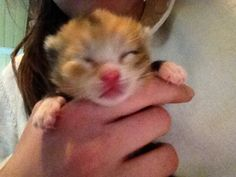 nyfødt kattunge