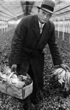 """On the southern rim of the industrial Flats along the Cuyahoga River, Martin Luther Ruetenik, son of a German immigrant pastor, built his first greenhouse on Schaaf Road in the village of Brooklyn Heights in 1885.  Over time his greenhouses and truck farms earned him the nickname the """"Celery King."""" By 1900 a handful of other growers, including Fred Witthuhn, had joined him, placing a total of five acres """"under glass.""""  Despite increasing competition from southern and western states, the..."""