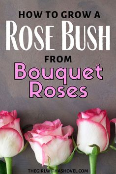 Use your rose bouquets as cuttings to grow your own plants! PRESERVE YOUR CUT FLOWERS! GROW THEM INTO YOUR OWN ROSE BUSH!!! Grow Roses from Cut Flowers | Propagate Roses | How to Grow Roses from Cuttings in Water | How to Propagate Roses |