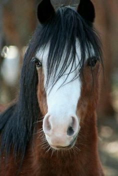 My horse's feet are as swift as rolling thunder. He carries me away from all my fears - And when the world threatens to fall asunder - His mane is there to wipe away my tears ~Bonnie Lewis
