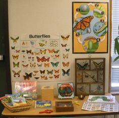Science Area Display: Butterflies