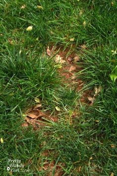 We have yards and yards of pristinely manicured blades of grass. Wait a cotton pickin' minute . patch spots in your grass the easy way! Backyard Landscaping, Landscaping Ideas, Backyard Ideas, Garden Ideas, Garden Tips, Outdoor Ideas, How To Lay Sod, Bald Spot Treatment, St Augustine Grass