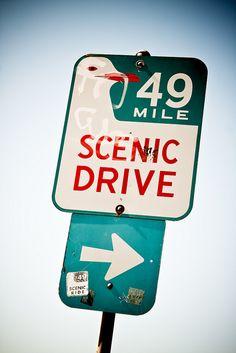 San Francisco's 49 Mile Scenic Drive #wanderingsole