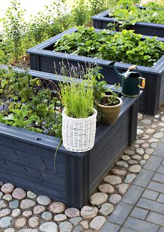 Garden ideas, garden plants, potager garden, edible garden, vegetable g Raised Garden, Diy Garden, Garden Design, Ideal Gardens, Plants, Small Garden Design, Backyard Landscaping, Small Backyard Landscaping, Urban Garden