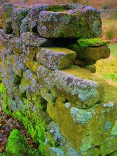 Fluorescent Mossy Stone Wall by Margret Clough