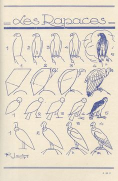 Exciting Learn To Draw Animals Ideas. Exquisite Learn To Draw Animals Ideas. Drawing Lessons, Drawing Techniques, Art Lessons, Drawing Guide, Bird Drawings, Animal Drawings, Easy Drawings, Drawing Birds, Learn To Draw