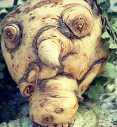 Which @Disney character does this #Parsnip look like?