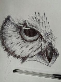 Bird Drawings, Pencil Art Drawings, Cool Art Drawings, Art Drawings Sketches, Animal Drawings, Sketch Drawing, Drawing Ideas, Sketch Tattoo, Drawing With Pen